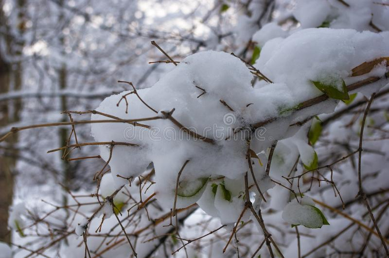 Snow-covered branches and trees in the city park. Winter landscape royalty free stock images