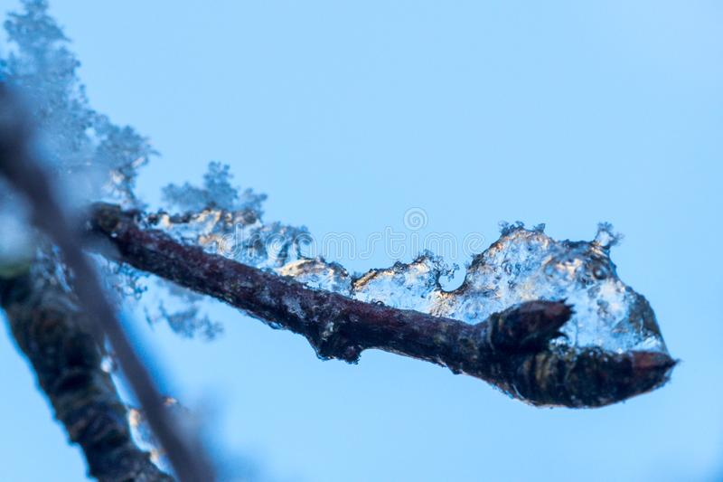 Snow covered branches on a wintery afternoon. In the garden stock photography