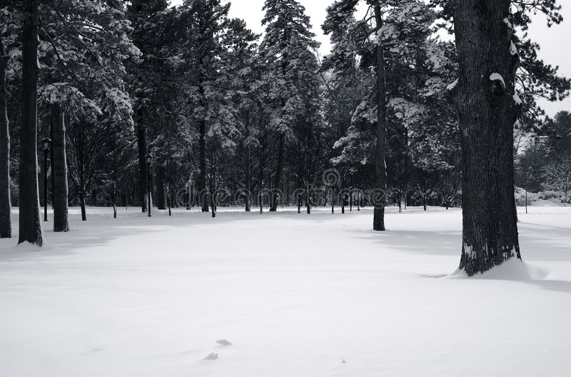 Snow Covered Canopy stock images