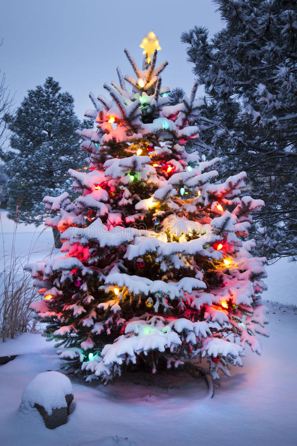 Download Snow Covered Christmas Tree Stands Out Brightly In Stock Image - Image: 32699705
