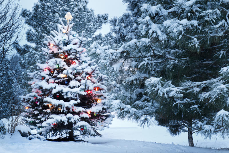 Snow Covered Christmas Tree stands out brightly in. This Snow Covered Christmas Tree stands out brightly against the dark blue tones of this snow covered scene stock photos