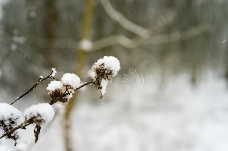 Snow covered close-up. Snow covered plants in close-up during snowfall royalty free stock photography