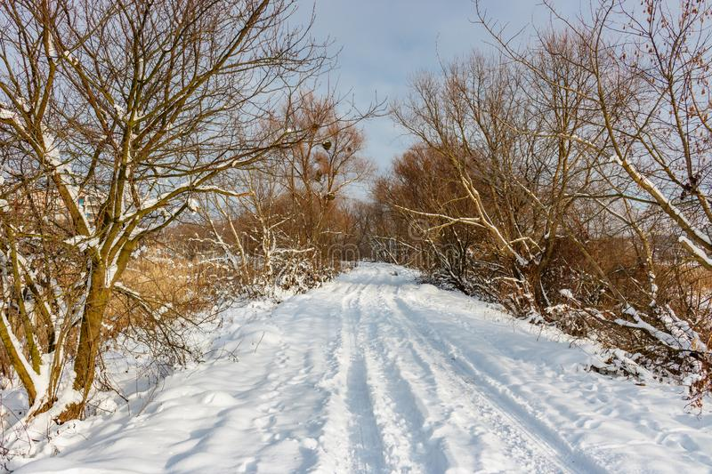 Snow covered country road among trees and bushes in sunny winter day. Rural landscape in winter stock photo