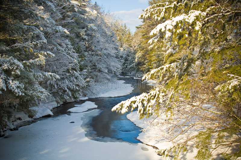Download Snow Covered Creek In Pine Forest Stock Image - Image: 4134913