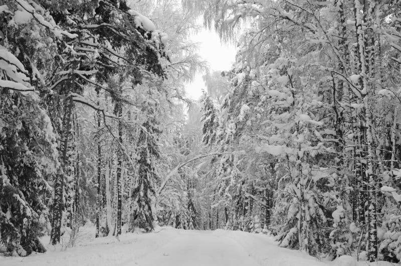 Snow-covered de winterhout royalty-vrije stock afbeeldingen