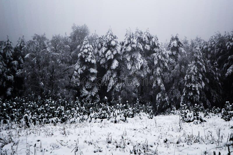 Snow-covered donkere stemmingsbomen stock foto's