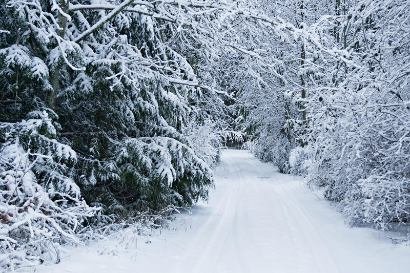 Snow covered driveway. Light blanket of snow covering a tree lined driveway stock photo