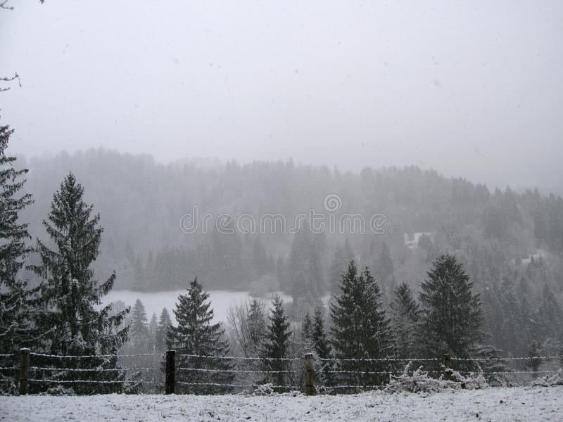 Download Snow Covered Evergreen Tree Forest Stock Image - Image of background, gray: 99547015