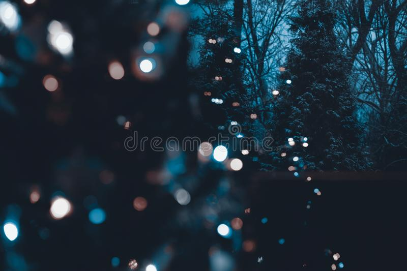 Snow covered evergreen trees at night with defocused illuminated Christmas tree in the foreground. Christmas background stock image