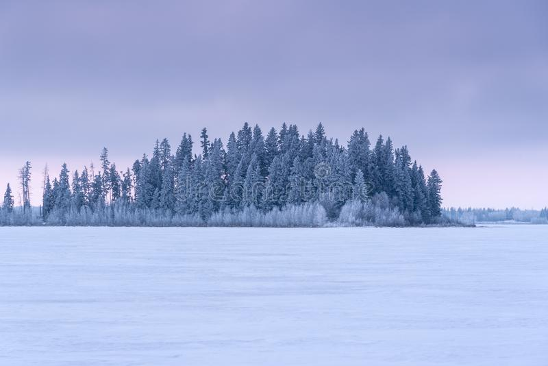 Snow Covered Evergreens at sunrise, Elk Island National Park, Canada stock photo