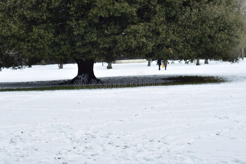 Snow covered field stock image