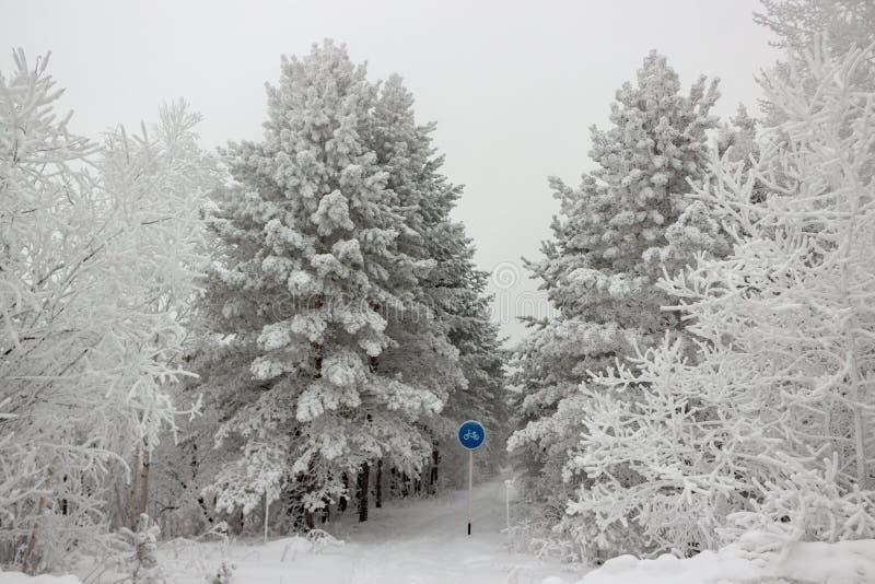 Snow-covered fietsweg in het de winterbos in bewolkte dag stock afbeelding