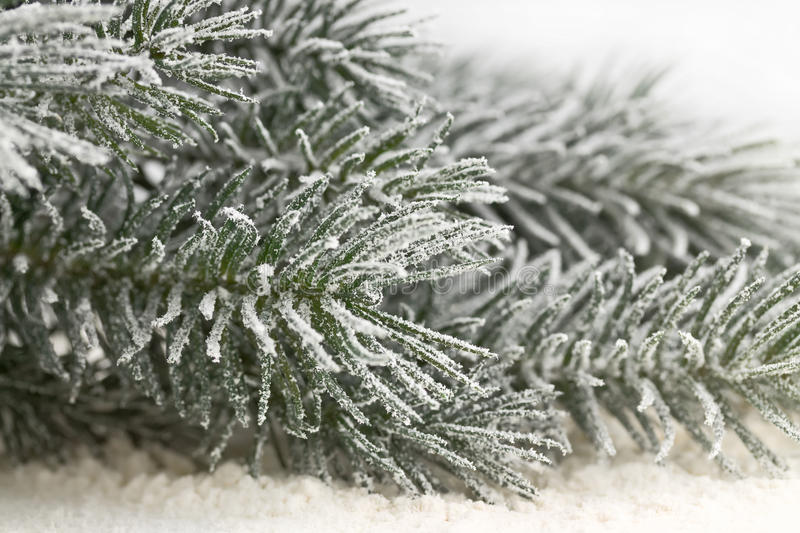 Download Snow-covered fir branches stock photo. Image of star - 27623860