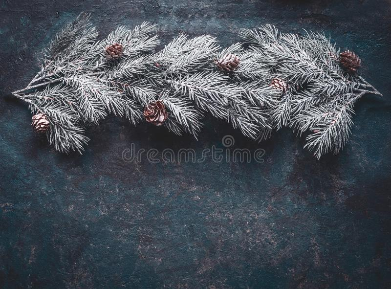 Snow covered fir branches with cones on dark blue background, top view with copy space for your design. Winter and Christmas concept royalty free stock photo