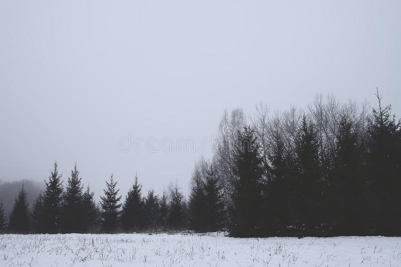Snow covered fir trees in cold winter day. Seasonal nature in East Europe royalty free stock photos