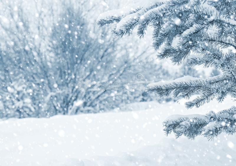In snow-covered forest royalty free stock image