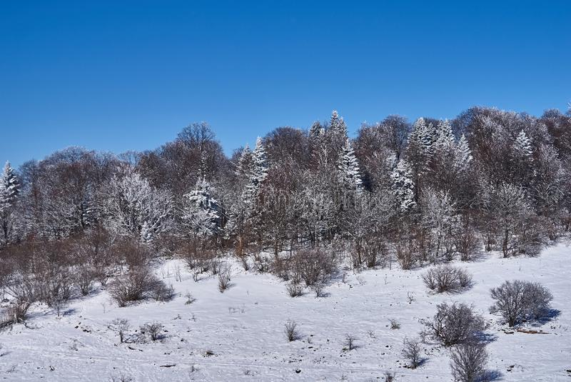 Snow-covered forest, in the foreground a snowy meadow, against the background - a blue sky. Lago-Naki, The Main Caucasian Ridge, R. Ussia royalty free stock images