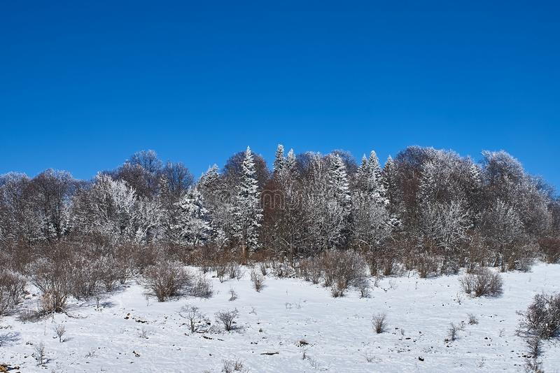 Snow-covered forest, in the foreground a snowy meadow, against the background - a blue sky. Lago-Naki, The Main Caucasian Ridge, R. Ussia stock photo