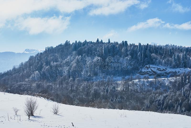 Snow-covered forest, in the foreground a snowy meadow, against the background - a blue sky. Lago-Naki, The Main Caucasian Ridge, R. Ussia royalty free stock photos