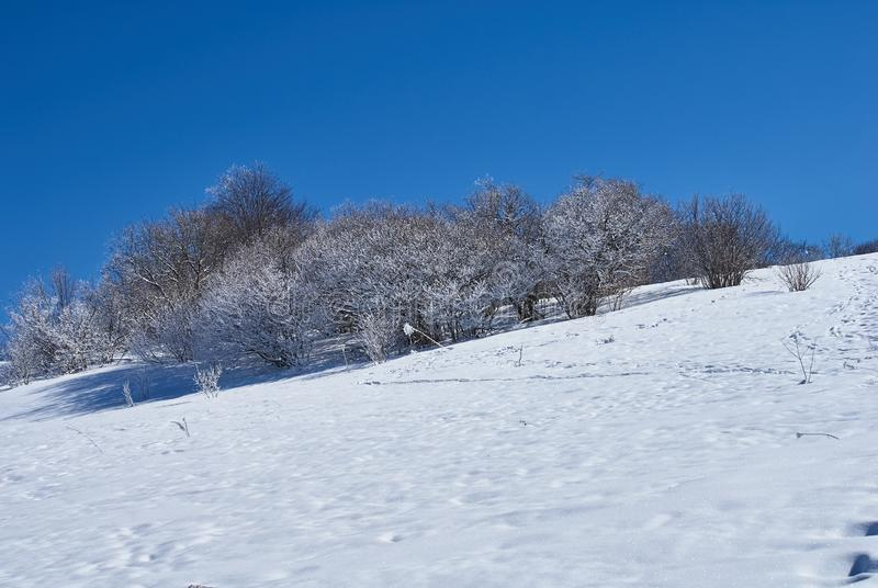 Snow-covered forest, in the foreground a snowy meadow, against the background - a blue sky. Lago-Naki, The Main Caucasian Ridge, R. Ussia stock photos