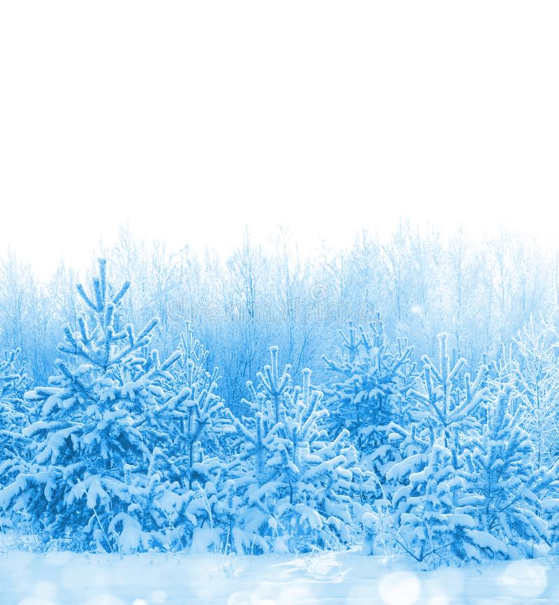 Snow-covered forest stock photos