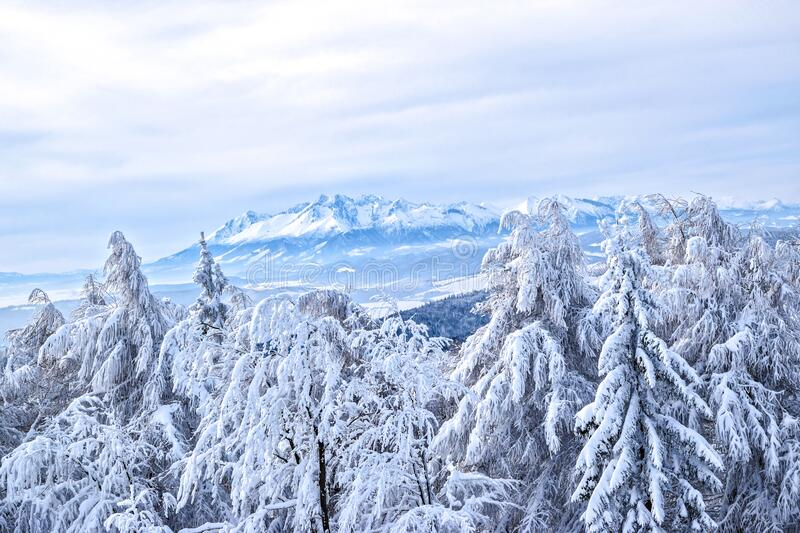 Snow covered forest and mountains royalty free stock photography