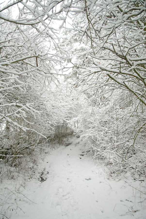 Snow-covered forest path