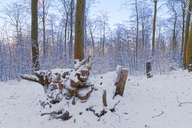 Download Snow Covered Forest In The Sunset Stock Photo - Image: 83711906