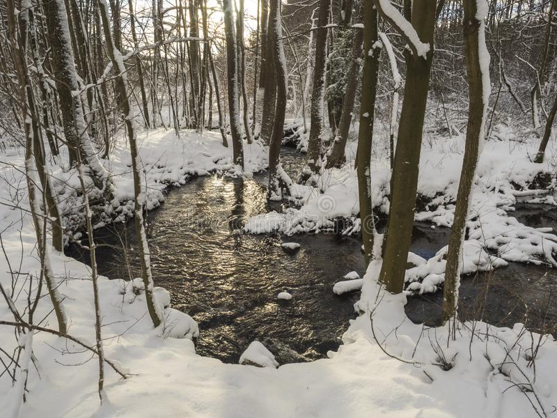 Snow covered forest water stream creek with trees, branches and stones, idyllic winter landscape in golden hour sun royalty free stock image
