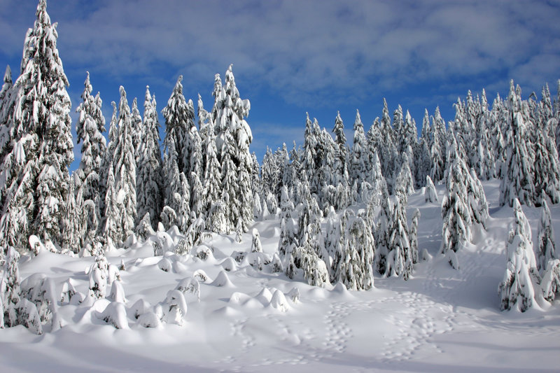 Snow covered forest in winter stock photos