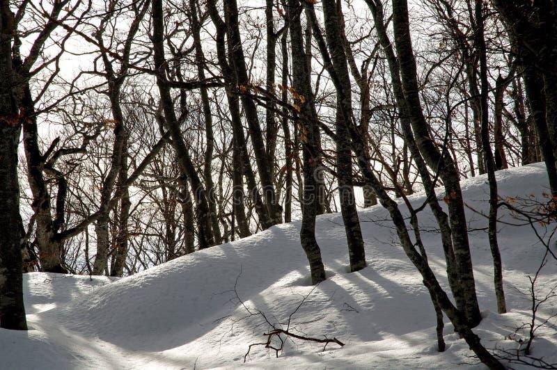 Snow-covered fundergrowth stock afbeeldingen