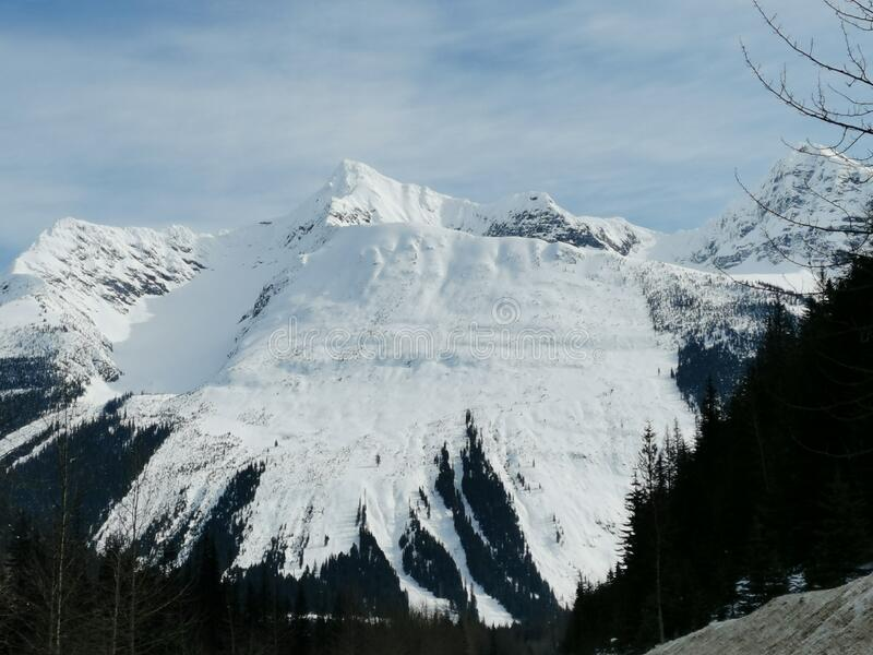 Snow covered giants stock photo