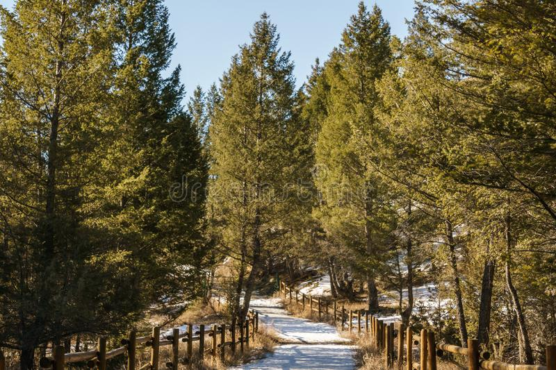 Snow covered hiking trail in the park in british columbia early spring royalty free stock photography
