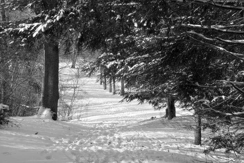 Snow covered hiking trail stock images