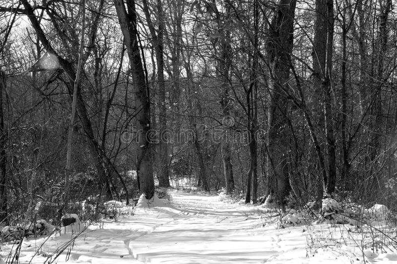 Snow covered hiking trail royalty free stock photo