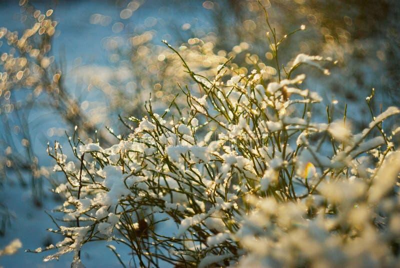 Snow-covered installaties glanzen op de zon royalty-vrije stock foto
