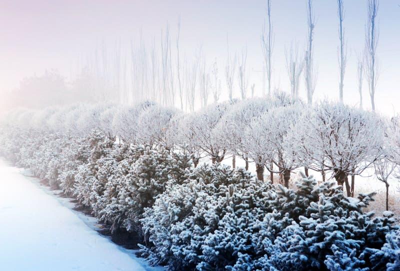 Snow-Covered Landschap royalty-vrije stock foto