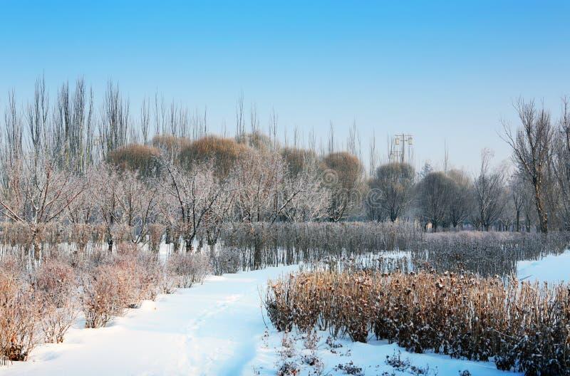 Snow-Covered Landschap stock foto's