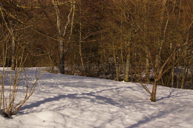 Snow-covered landschap, in een bos - Frankrijk royalty-vrije stock fotografie
