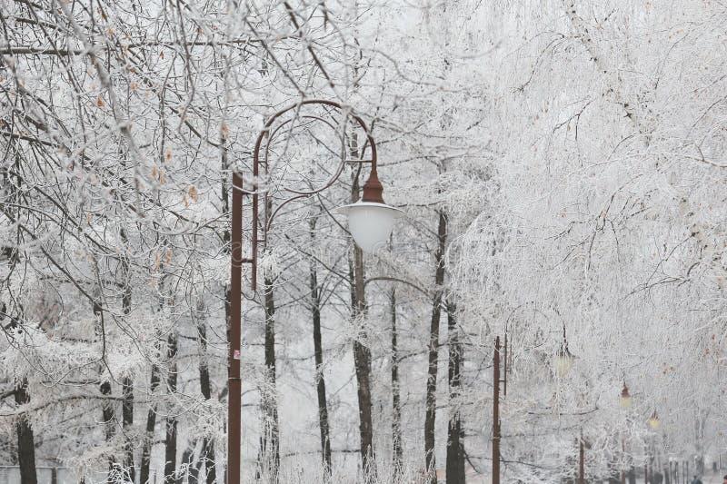 Snow-covered lantaarnpaal in stadspark stock fotografie