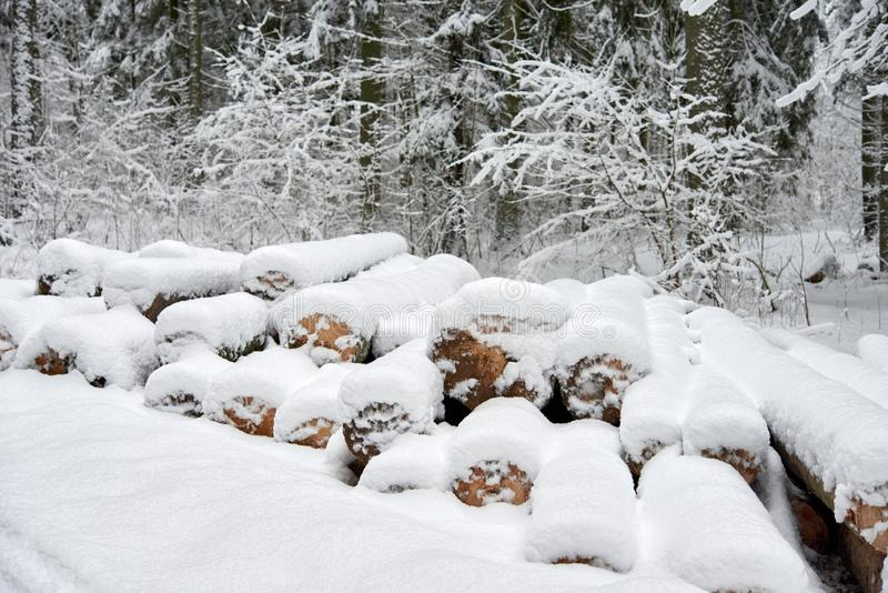 Snow-covered logs in the forest in winter royalty free stock photos