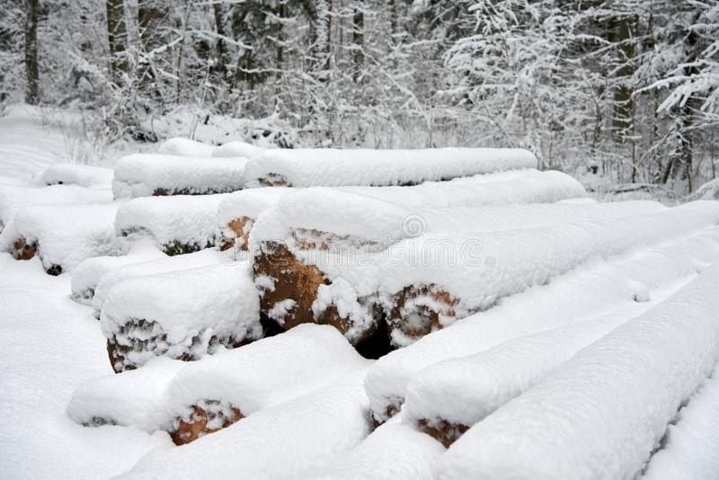Snow-covered logs in the forest in winter royalty free stock photo