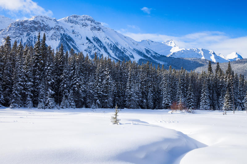 Snow covered meadow in Peter Lockheed Provincial Park, in the Ca stock photo