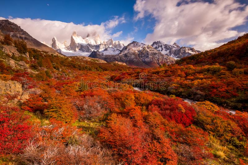 Snow-covered Mount Fitz Roy on beautiful fall day amongst forest of lenga trees. Hiking in Los Glaciares National Park on a beautiful fall day, taking in the royalty free stock photography