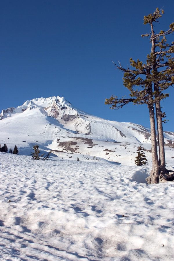 Download Snow Covered Mountain stock image. Image of volcano, tree - 38951