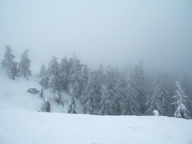 Snow covered mountain hills with forest in thick fog.  stock photography