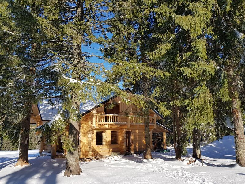 Snow covered mountain hut and fir trees. Chalet with wooden logs, it is surrounded by fir trees and everything is covered by a thick white snow royalty free stock photo