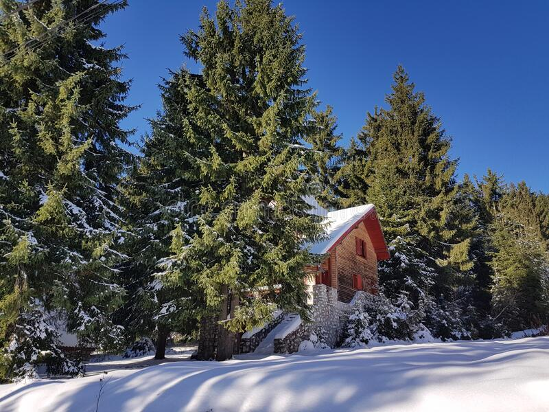 Snow covered mountain hut and fir trees. Chalet with wooden logs, it is surrounded by fir trees and everything is covered by a thick white snow stock photography