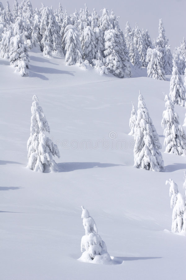 Download Snow Covered Mountain And Trees Stock Image - Image: 1573733