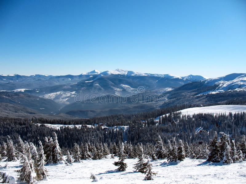 Snow covered mountains peaks with hills covered fir-tree forest. Winter landscape of the Carpathians in Ukraine.  royalty free stock images